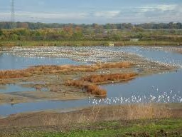 One of Beddington's lakes that will be blighted by the building of a waste incinerator
