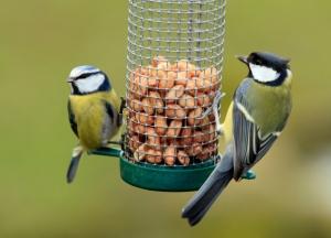 tits rspb birds