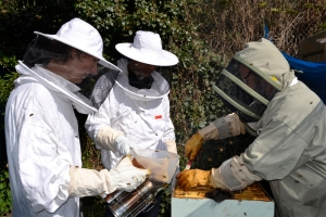 Join the buzz: local bee-keepers need your support