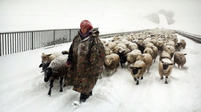 A scene from Winter Nomads, winner of Best Documentary at the 2013 European Film Awards, and the Save the David Lean Cinema Campaign's screening on January 20