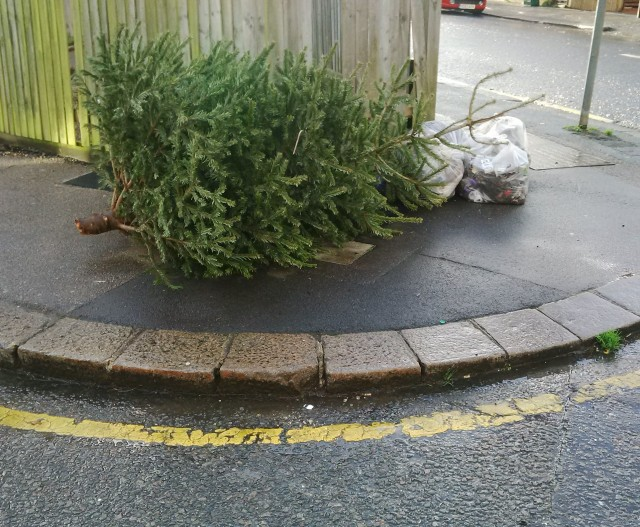 The scene on Abbey Road yesterday. Council Tax-payers will be picking up the bill for the tree's removal