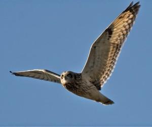 Beddington Farmlands is home to wintering owls