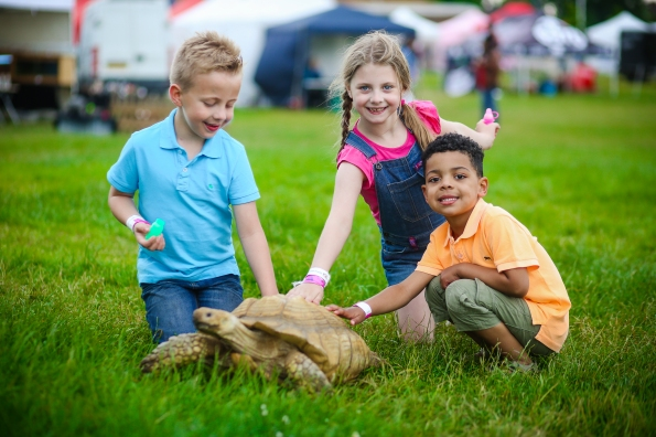 The fair included a number of trade stalls, as well as a menagerie of reptiles, offering kids a chance to get up close to this tortoise. Photograph by Lee Townsend