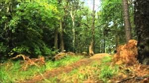 Addington Hills: primelocation for an autumnal Sunday walk